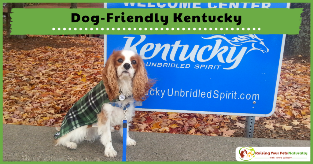 Dog-Friendly Vacations in Kentucky. If you are traveling with dogs, you won't want to miss these Dog-Friendly Kentucky attractions, hotels and destinations. #raisingyourpetsnaturally
