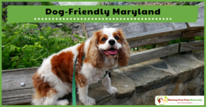 Dog-Friendly Maryland