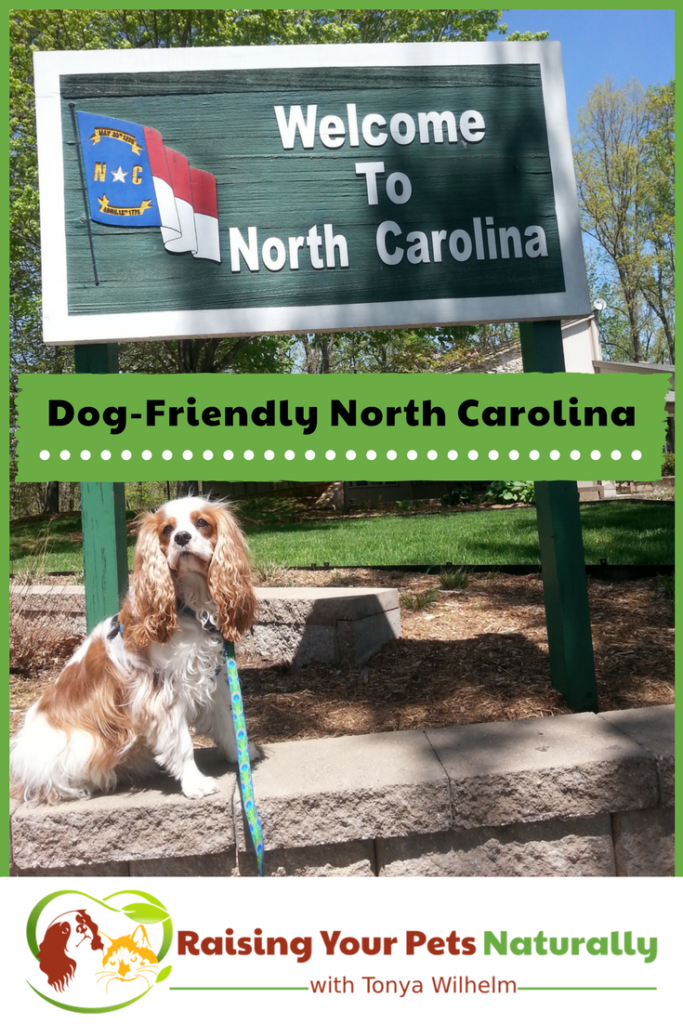 Dog-Friendly Vacations in North Carolina. If you are traveling with dogs, you won't want to miss these Dog-Friendly North Carolina attractions, hotels and destinations. #raisingyourpetsnaturally #dogfriendly #dogfriendlync #dogfriendlynorthcarolina #travelingwithdogs #travelwriter #travelwriting