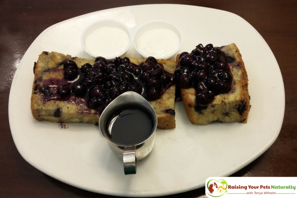 Dog-Friendly Restaurants in The Chicago Area. Blueberry Hill Cafe Review. Blueberry Hill Cafe's friendly, family atmosphere was combined with great prices and exceptional food! #raisingyourpetsnaturally
