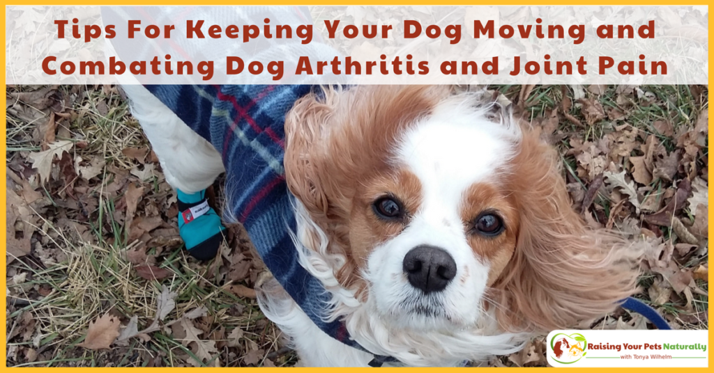 Tips For Keeping Your Dog Moving and Combating Dog Arthritis and Joint Pain. Natural care for your senior or special needs dog. #raisingyourpetsnaturally