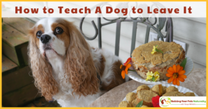 Positive Dog Training Tips | How to Teach Your Dog to Leave It