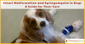Chiari Malformation and Syringomyelia in Dogs. A Guide for Their Care | What I've Learned with Dexter