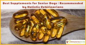 Best Supplements for Senior Dogs | Recommended by Holistic Veterinarians