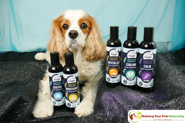 USDA Certified Organic Dog Shampoo with Organic Aloe Juice and Organic Essential Oils by 4-Legger. Organic Neem Dog Shampoo Review #raisingyourpetsnaturally