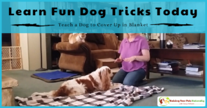 Positive Reinforcement Dog Training and Dog Tricks | Teach a Dog to Cover Up in Blanket