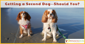 Getting a Second Dog-Should You? Things to Consider When You are Thinking about Adopting a Second Dog