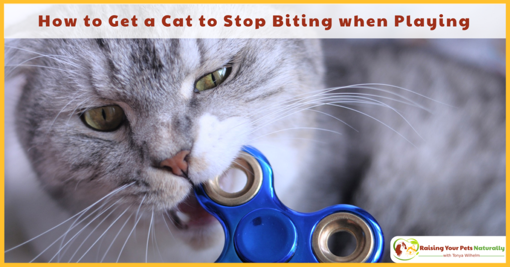 Why does my cat bite me during play? How to play with a cat properly. #raisingyourpetsnaturally