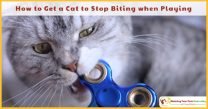 Why Does my Cat Bite Me During Play? | How to Get a Cat to Stop Biting when Playing