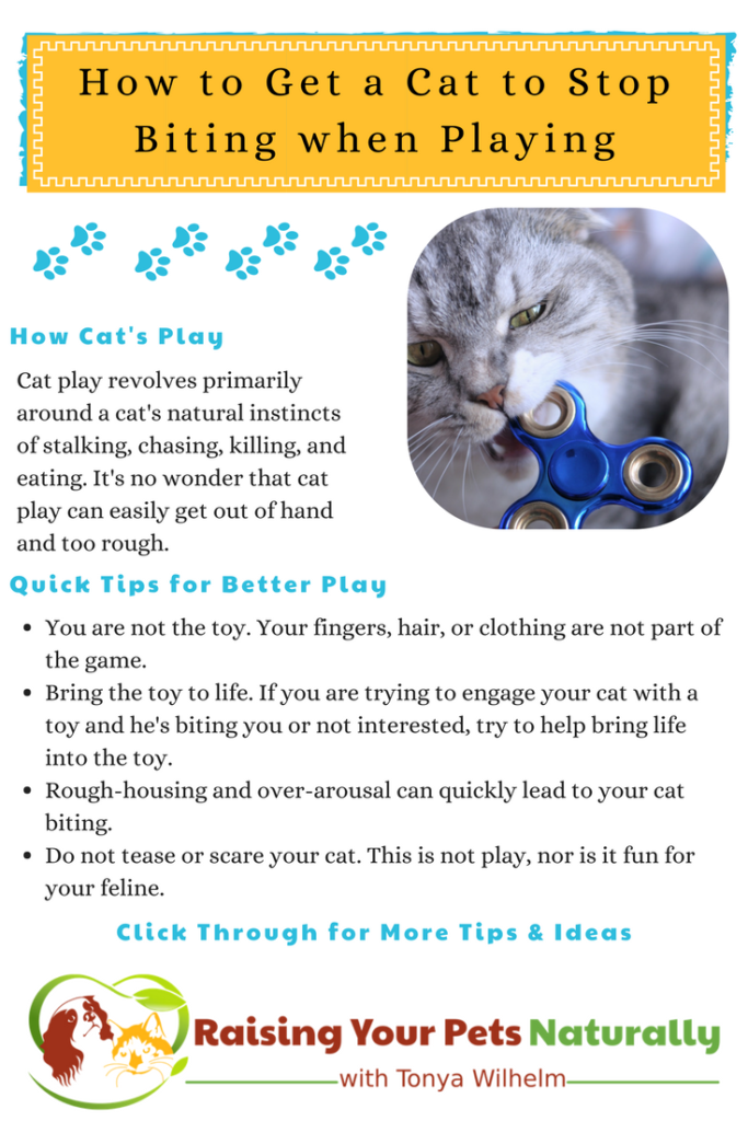Why does my cat bite me during play? How to play with a cat properly. #raisingyourpetsnaturally #cats #catbehavior #catplay #catbiting #cataggression #catgames #catenrichment
