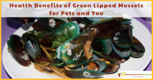 Health Benefits of Green Lipped Mussels for Dogs and Cats and You