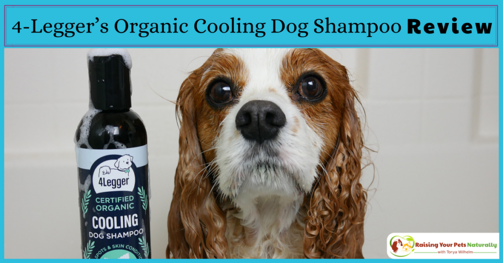 Natural Dog Shampoo Review: USDA Certified Organic Dog Shampoo with Peppermint and Tea Tree Oil by 4-Legger. #raisingyourpetsnaturally