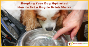 Keeping Your Dog Hydrated and Preventing Dog Dehydration | How to Get a Dog to Drink Water
