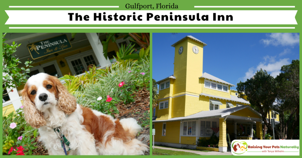Dog-Friendly Florida Beach Vacations. The Historic Peninsula Inn, Gulfport, Florida Review. #raisingyourpetsnaturally
