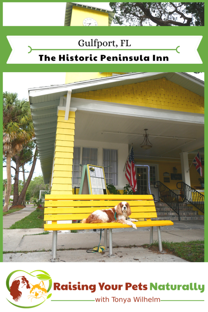 Dog-Friendly Florida Beach Vacations. The Historic Peninsula Inn, Gulfport, Florida Review. #raisingyourpetsnaturally #petfriendly #petfriendlyvacationrentals #gulfport #florida #gulfportflorida #dogfriendlyflorida
