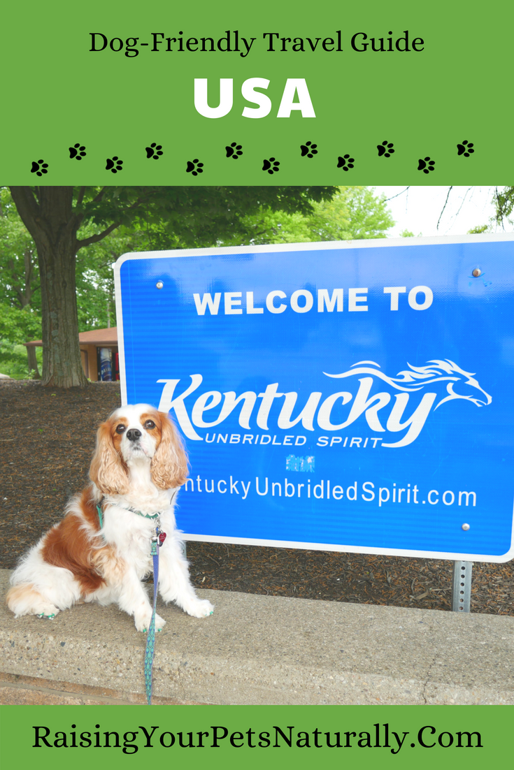 Road Trips with Dogs-Dog-Friendly Road Trip Guides ~ Raising Your
