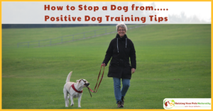 How to Stop a Dog from….. Dog Training and Behavior Modification Takes Time | It's More Than a Blog Post