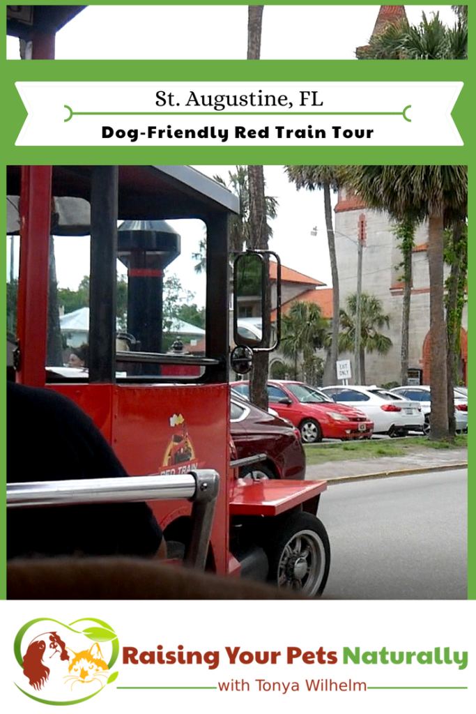 Dog-Friendly Red Train Tour Overview. One of the best parts was able to see the best parts of historic St. Augustine that I may never have known about. #raisingyourpetsnaturally #dogfriendlyvacations #Florida #dogfriendly #staugustine #petfriendlyvacations #travelingwithdogs #petfriendly #floridabeaches #redtrain