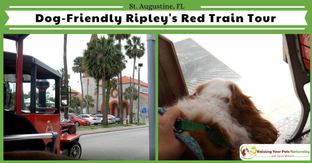 Dog-Friendly Red Train Tour Overview. One of the best parts was able to see the best parts of historic St. Augustine that I may never have known about. #raisingyourpetsnaturally