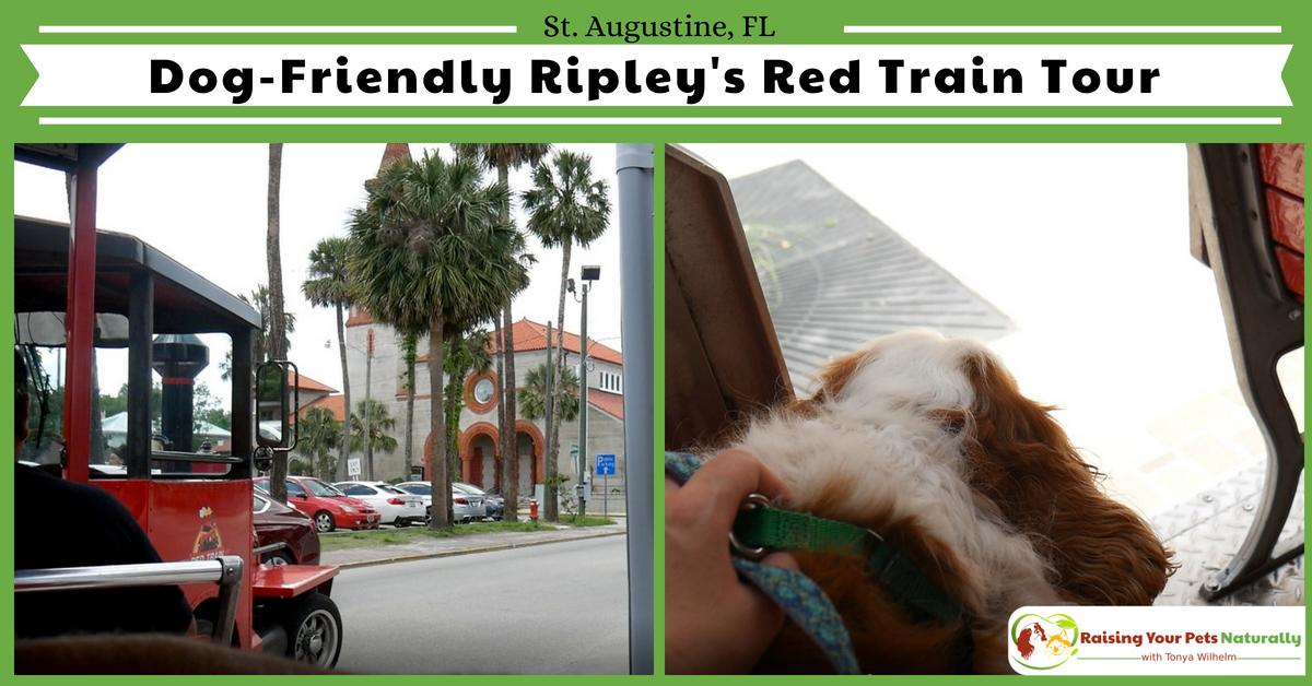 Dog Friendly Vacations Florida
