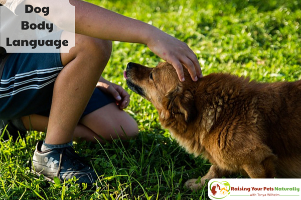 Understanding dog body language with pictures. Not sure what your dog's body language is telling you? Here are a few pictures to get you started. #raisingyourpetsnaturally