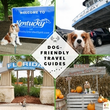 Travel Guides for Dogs