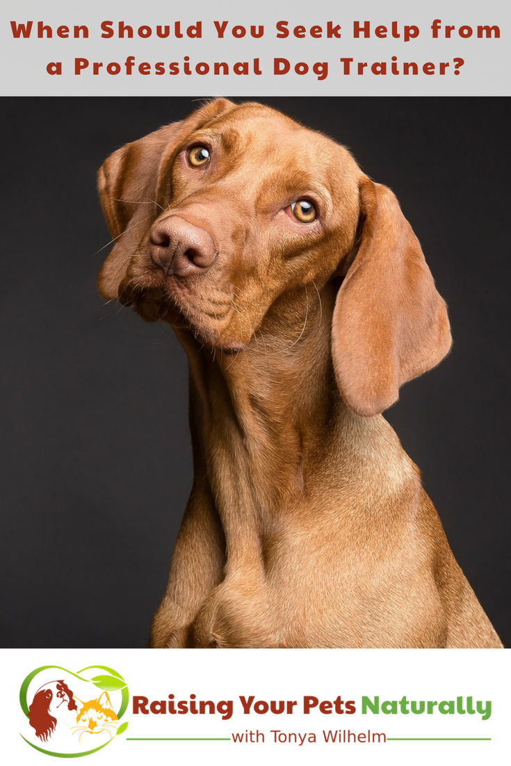 When Should Seek Help from a Professional Dog Trainer? 6 Dog Behaviors That May Need Professional Help. #raisingyourpetsnaturally #dogtraining #dogtrainingtips #dogbehavior #bestdogtrainingtips #pettraining