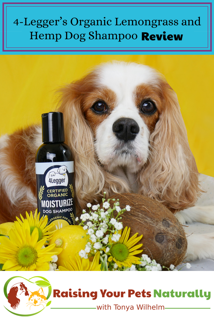 Natural Dog Shampoo Review: USDA Certified Organic Dog Shampoo with Lemongrass and Hemp by 4-Legger. Best smelling dog shampoo for dry skin and odor! #raisingyourpetsnaturally #dogshampoo #bestdogshampoo #naturaldogshampoo #organicdogshampoo #4legger
