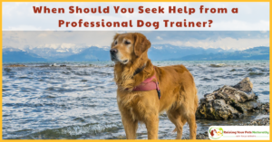 When Should Seek Help from a Professional Dog Trainer? 6 Dog Behaviors That May Need Professional Help