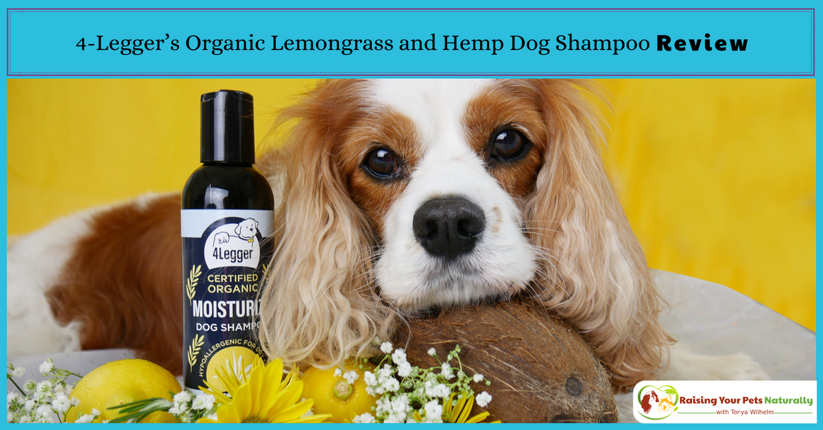 Natural Dog Shampoo Review: USDA Certified Organic Dog Shampoo with Lemongrass and Hemp by 4-Legger. Best smelling dog shampoo for dry skin and odor! #raisingyourpetsnaturally