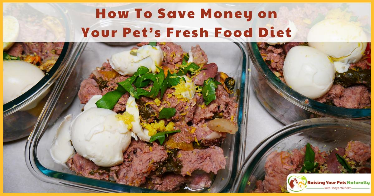 How To Save Money On Your Pet S Fresh Food Diet Saving