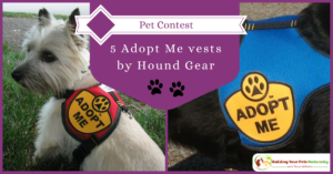 Pet Contest-Register to win Adopt Me vests by Hound Gear