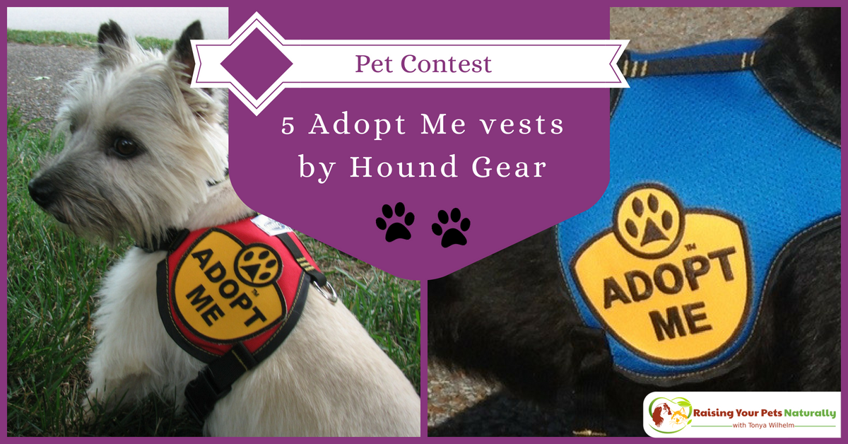 Hound Gear Pet Products Adopt Me vests giveaway. Enter to with this free giveaway and help local dog rescue organizations at the same time. #raisingyourpetsnaturally
