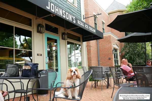 Dog-Friendly Ice Cream Shops in Ohio