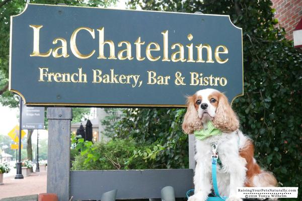 Best pet friendly vacation spots
