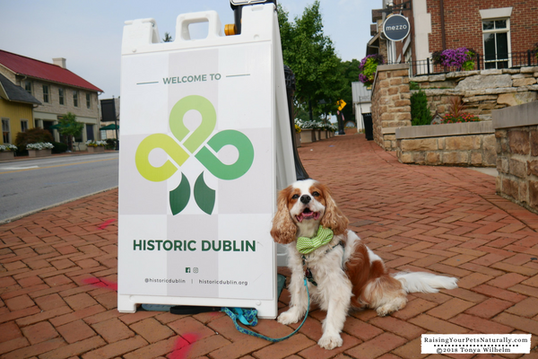 Historic Places To Visit with a Dog