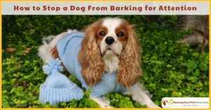 How to Stop a Dog From Barking for Attention and Other Attention Seeking Behaviors