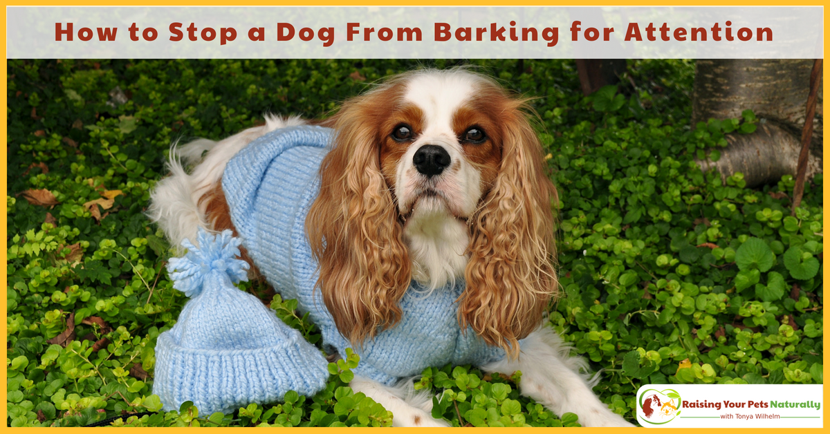 how to help a dog stop barking