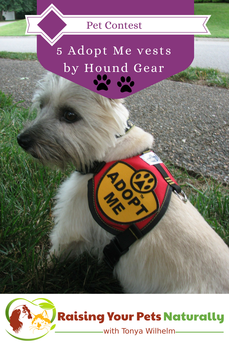 Hound Gear Pet Products Adopt Me vests giveaway. Enter to with this free giveaway and help local dog rescue organizations at the same time. #raisingyourpetsnaturally #adoptionvests #dogcontest, #doggiveaway #petgiveaway #houndgear #adoptmevets