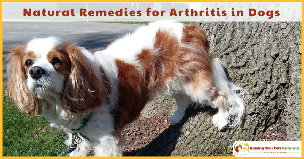 dog arthritis treatment