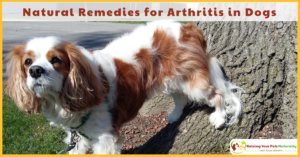 Natural Remedies for Arthritis in Dogs and Natural Remedies for Joint Pain in Dogs