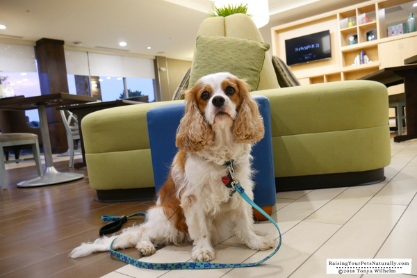 Pet-Friendly Hotels in Dublin, Ohio-Home2 Suites Dublin