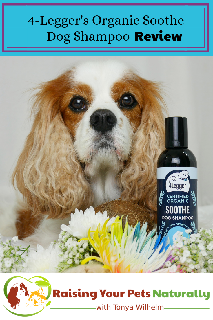 Hypoallergenic and Fragrance Free All Natural Dog Shampoo. 4-Legger USDA Certified Organic Aloe Dog Shampoo - Hypoallergenic and Fragrance Free (Unscented) Review #raisingyourpetsnaturally #dogshampoo #dogshampooreviews #4legger #bestdogshampoo #diydogshampoo #homemadedogshampoo #naturaldogshampoo #organicdogshampoo