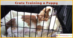 Puppy Training Tips | Zen Crate Training a Puppy
