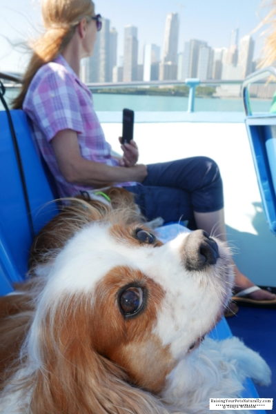 Dog Friendly Attractions Near Me