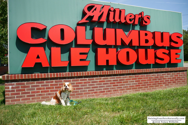 Dog-Friendly Vacations in the Midwest. Columbus, Ohio Dog-Friendly Travel Guide. #raisingyourpetsnaturally