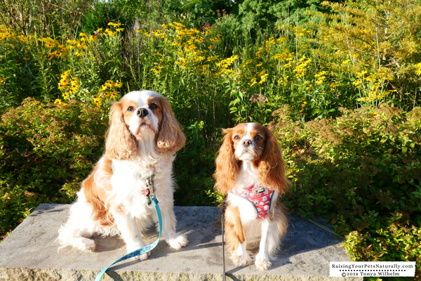 Dog-friendly parks and attractions in Columbus, Ohio.