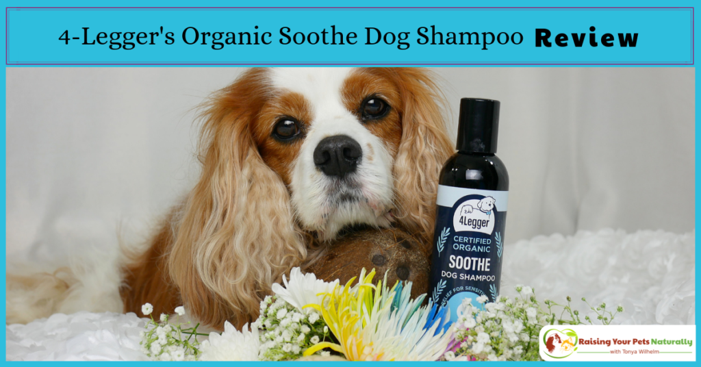 Hypoallergenic and Fragrance Free All Natural Dog Shampoo. 4-Legger USDA Certified Organic Aloe Dog Shampoo - Hypoallergenic and Fragrance Free (Unscented) Review #raisingyourpetsnaturally