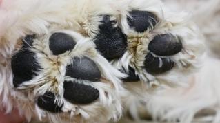 Pet Care Articles/Video