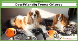 Pet-Friendly Luxury Hotels in Downtown Chicago | Dog-Friendly Stay at Trump International Hotel & Tower Chicago
